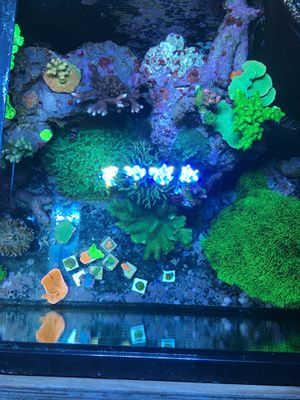Coral frags for Sale in West Palm Beach, FL