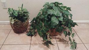Decorative plants for Sale in Phoenix, AZ
