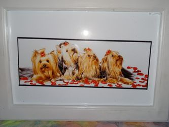 4 Yorkie Framed Pitchure for Sale in Tulsa,  OK