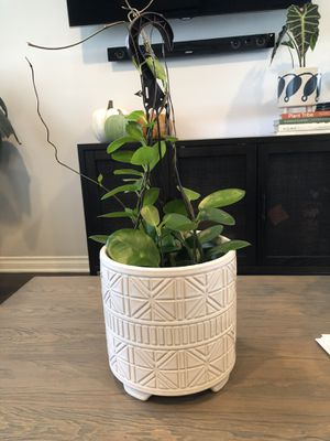 Hoya carnosa plant in planter pot for Sale in National City, CA
