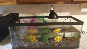 Aquarium 20 gallon setup African Cichlid for Sale in Newark, OH