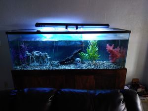 160 gallon fresh water fish tank. for Sale in Palmdale, CA