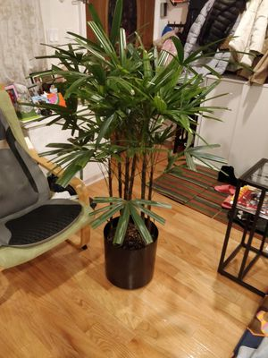 Beautiful Indoor plant (unknown name) for Sale in Queens, NY
