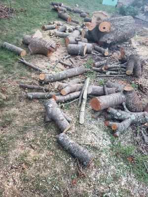 Free wood for Sale in PA, US