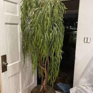 Plant for Sale in Lynwood, CA