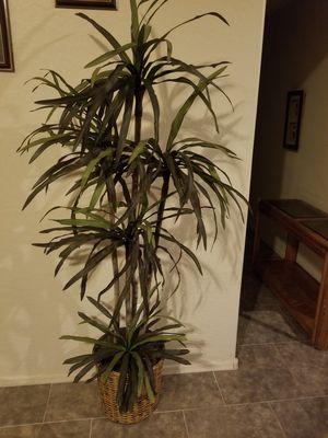 Artificial Tree for Sale in Phoenix, AZ