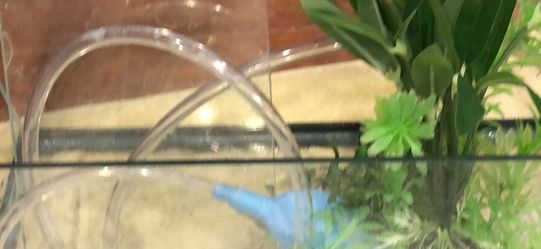 5.5 Gallon Rimless Tank With Custom Lid for Sale in Los Angeles,  CA