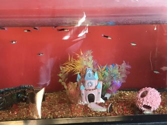 Fish Tank With Fish And Filter(check Details)(pickup Only In Manassas) for Sale in Manassas,  VA