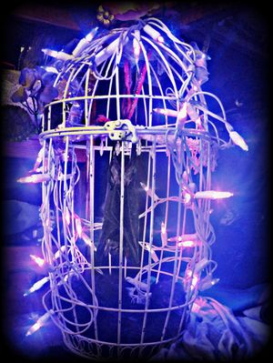 Sphinx bat in a cage with lights. Curiosities. for Sale in Tacoma, WA