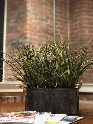 Decor plant for Sale in Lowell, MA