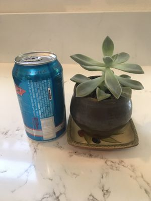 Single succulent plant and pot for Sale in Seattle, WA