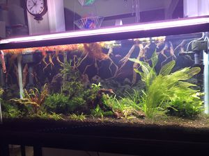 55 Gallon Plant Ready Aquarium Fish Tank & Tons of Extras for Sale in Virginia Beach, VA