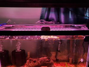 20 gallon tall fish tank for Sale in Rocky River, OH