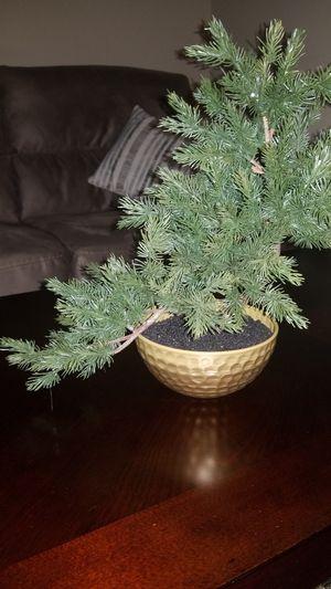 Fake bonsai plant (decor) for Sale in Houston, TX