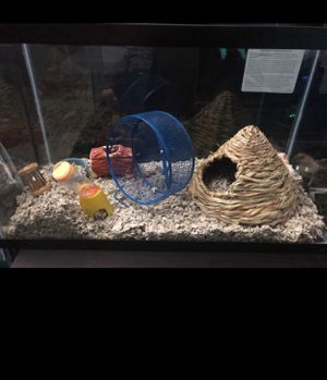 """Teddy bear hamster """" """" don't have time for him anymore for Sale in Silver Spring, MD"""