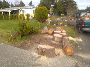 Fresh cedar firewood. 1 cord delivered for Sale in Tacoma, WA