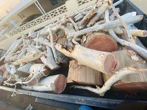 Eucalyptus free for Sale in Phoenix, AZ