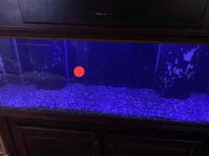 125 tall aquarium with dual overflows for Sale in Northborough, MA