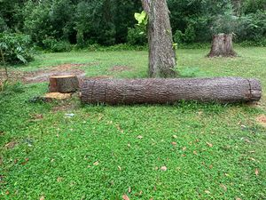Free Wood - Needs To Be Cut for Sale in Orlando, FL