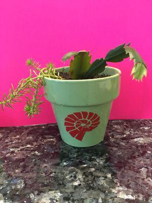 Christmas cactus and succulents for Sale in Oyehut-Hogans Corner, WA