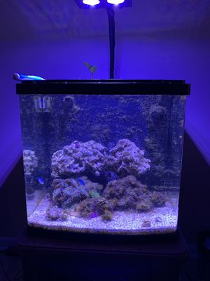 32gallon Biocube Nano tank for Sale in Lincoln, NE