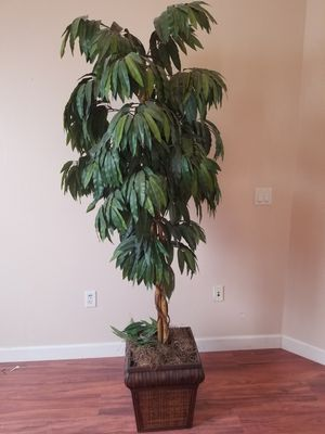 House Tree for Sale in Spring Hill, FL