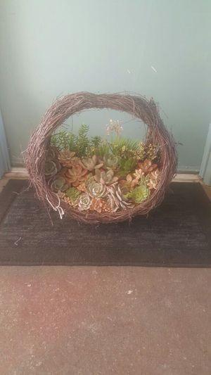 Easter Succulent Arraignment for Sale in Vista, CA