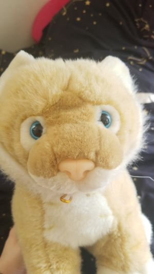 Jason the Lion Cat plush for Sale in Northumberland, PA