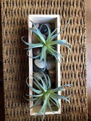 Fake succulent decor for Sale in Omaha, NE