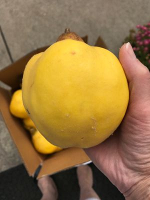 Homegrown Quince for Sale in Portland, OR