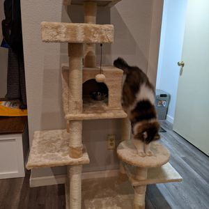 Cat Tree for Sale in Chandler, AZ