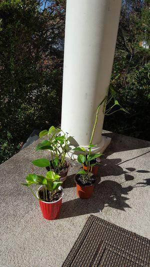 Indoor organic plants on sale for Sale in Woodbridge, VA