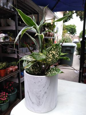 SHADE INDOOR PLANT for Sale in Paramount, CA