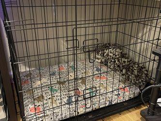 Go Pet Club 2 Door Metal Dog Crate for Sale in Hayward,  CA