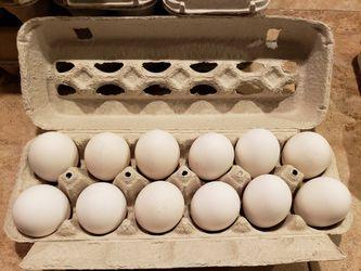 Eggs Free Range $4 Dozen for Sale in Avon Park,  FL