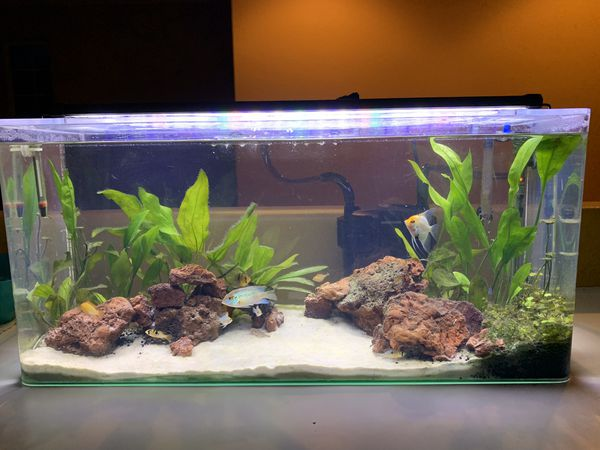 20 gallon acrylic tank aquarium with all equipment included (canister filter/heater/led light)