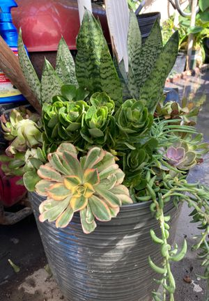 Succulents pots for Sale in Vernon, CA