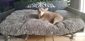 Couch/bed for dogs for Sale in San Diego, CA