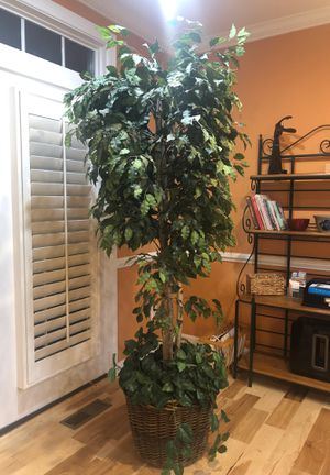Fake ivy trees x 3 for Sale in Sterling, VA