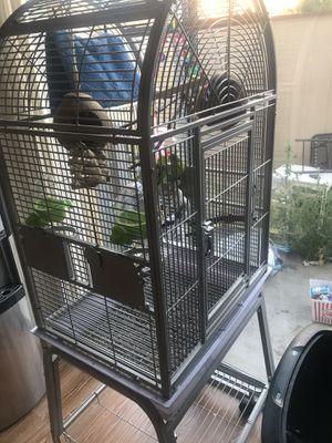 Cage with three birds for Sale in El Cajon, CA