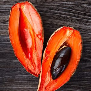 Mamey plant😃😃😃😃😃🌿🌿🌿 for Sale in Los Angeles, CA