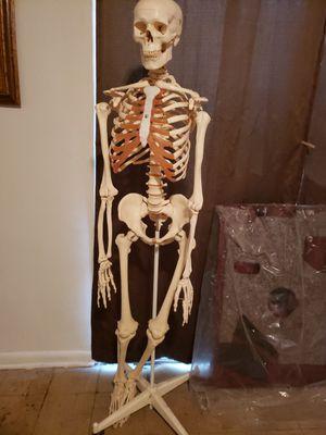 Life size anatomy skeleton for Sale in Virginia Beach, VA
