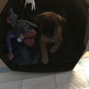Small Travel Dog Crate for Sale in Kirkland, WA