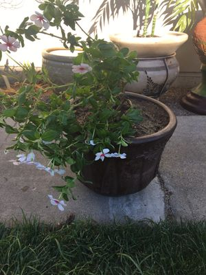 Flower and pot for Sale in Colton, CA