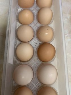 Organic Eggs for Sale in Los Angeles,  CA