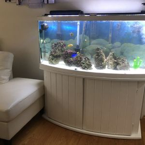 Fiah Tank With Stand for Sale in Shelton, CT