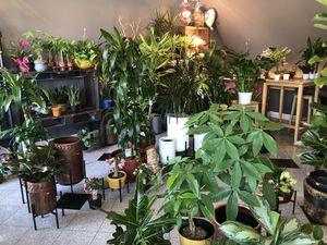 Fresh Indoor Plants plant for Sale in Ontario, CA