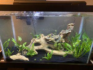 60 gal Aquarium for Sale in Colorado Springs, CO