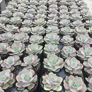 Succulent box for Sale in Homestead, FL