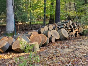 Firewood $50.00 a pickup truck load. New in Doylestown, PA. All different sizes. for Sale in Doylestown, PA